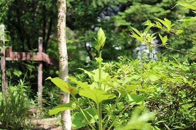 2013-07-ubayuri1.jpg