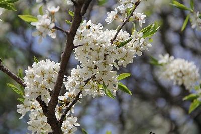 2012-05-shiki-037.jpg