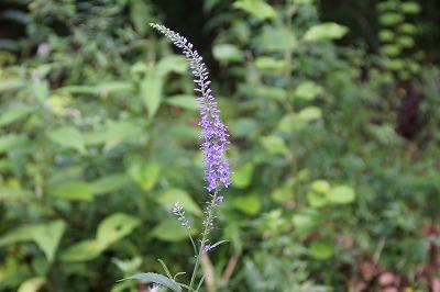 2012-08-shiki-231.jpg