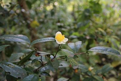 2012-11-shizen-007-cha.jpg