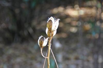 2012-12-shizen-003-ubayuri.jpg