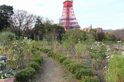 2013-12-prince-park-tower-garden-rose-008.jpg