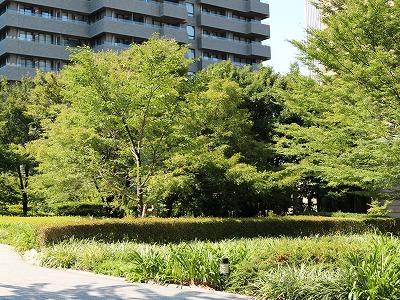 2013-izumi_garden.jpg