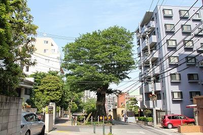2012-05-dentsuin-008.jpg