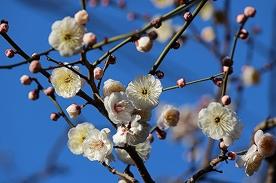 2013-02-arisugawa-002.jpg