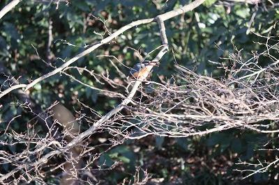 2018-02-自然園鳥-071.jpg